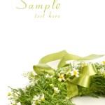 guirnalda de manzanilla aislado en blanco — Foto de Stock