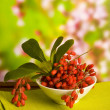 Barberry — Stock Photo #6728604