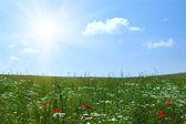 Doğa arka plan — Stok fotoğraf