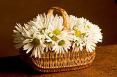 Fresh Daisies bouquet in basket — Стоковое фото