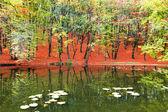 Sonbahar manzarası — Stok fotoğraf