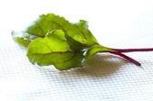 Young fresh red Swiss chard leaves — Stock Photo