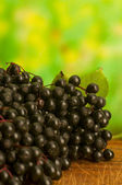 Sambucus nigra — Stock Photo