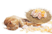 Cat with flower bouquet — Stock Photo
