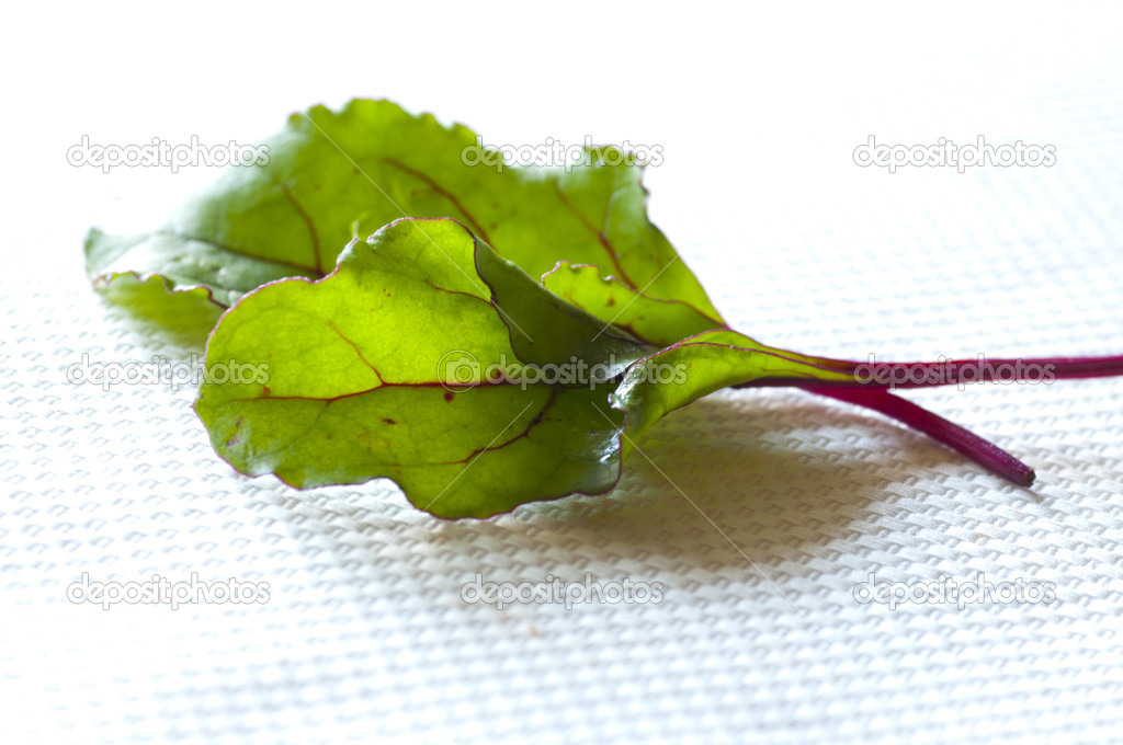 Young fresh red Swiss chard leaves  — Stock Photo #6727372