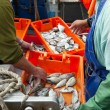 Fresh sardines in orange box — Stock Photo #6212236