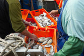 Fresh sardines in orange box — Stock Photo