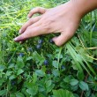 Big bilberry - Stock Photo