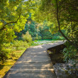 Stock Photo: Pathway in KRKpark at Croatia