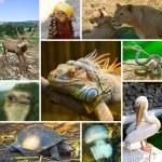 Collage of animals — Stock Photo