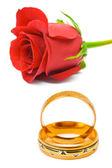 Rose och vigselringar — Stockfoto
