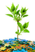 Puzzle and plant — Stock Photo