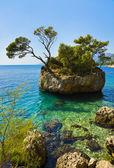 остров и деревья в брела, хорватия — Стоковое фото