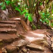 Pathway in jungle, Vallee de Mai, Seychelles — Stock Photo