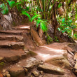 Stock Photo: Pathway in jungle, Vallee de Mai, Seychelles
