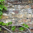 Old grunge brick wall with green leaves decoration — Stock Photo