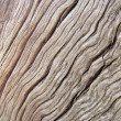 Abstract old wood texture — Stock Photo