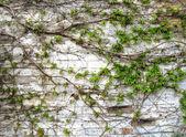 Gamla grunge tegelvägg med gröna blad dekoration — Stockfoto