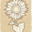 Sunflower .Vector vintage postcard with grunge elements — Stock Vector #5776007