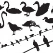 Birds.Vector black silhouettes of wild birds on white — Stock Vector