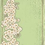 Vintage floral postacardfor design.Vector grunge image — Stock Vector #6556554