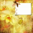 Floral greeting card with place for your text. — Stock Photo #6405137