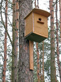Starling house on a pine — Stock Photo