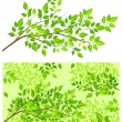 Branch tree with green leaf — Imagen vectorial