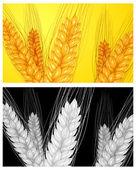 ухе пшеницы фон — Cтоковый вектор