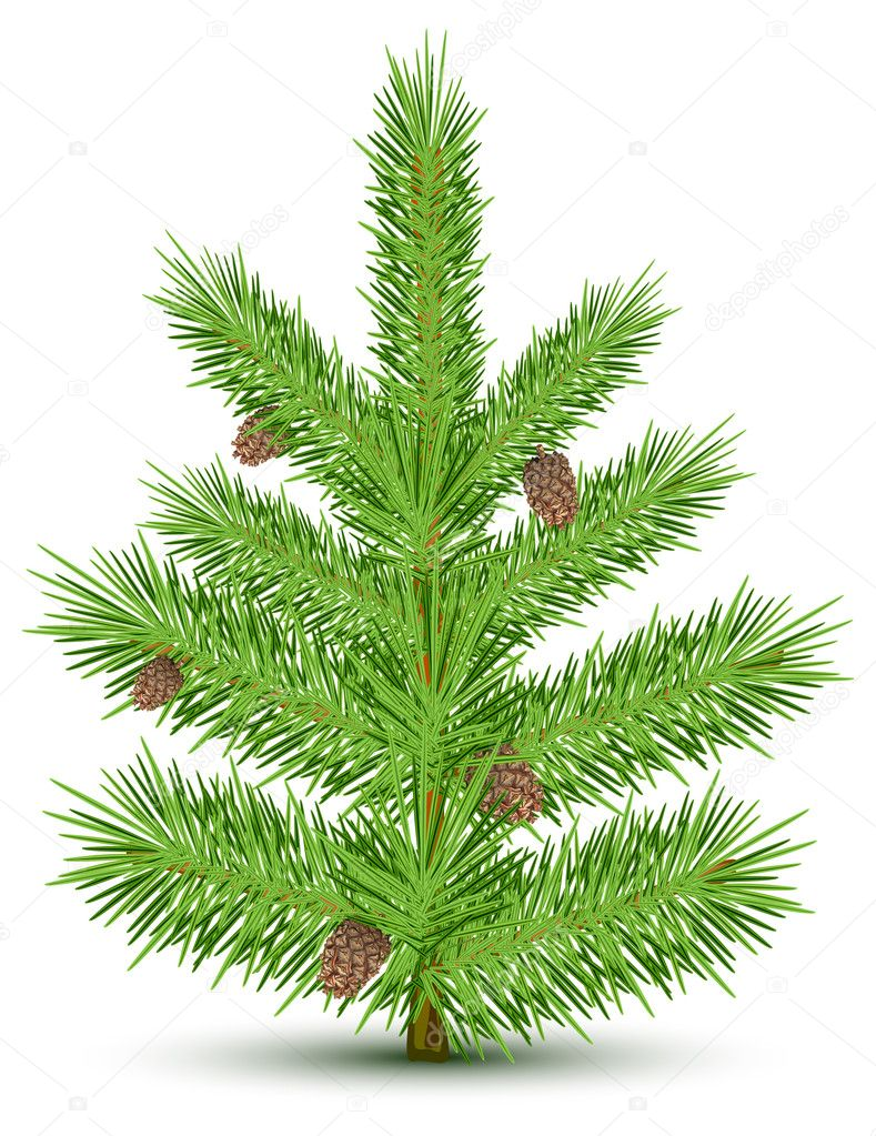Cones on green christmas fur-tree. Isolated object on white. Vector illustration — Vettoriali Stock  #5760605