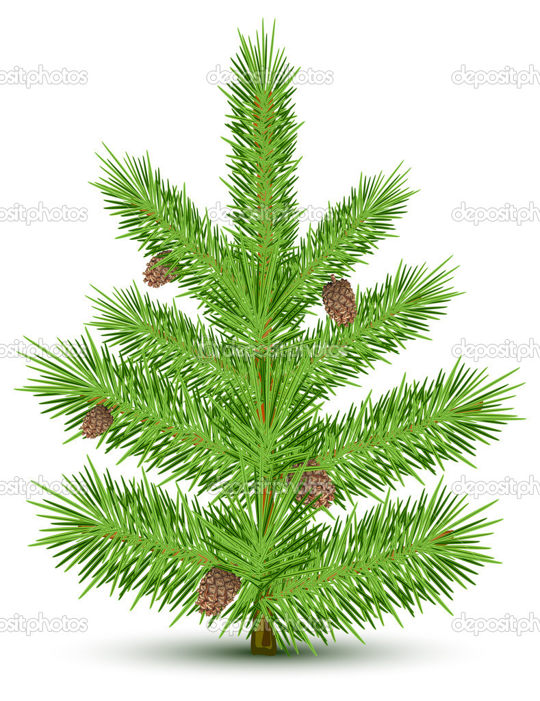 Cones on green christmas fur-tree. Isolated object on white. Vector illustration  Stock Vector #5760605
