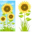 Sunflowers on blue — Stock Vector