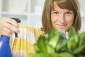 女人在家里浇水的植物 — 图库照片