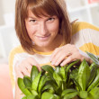 Woman with home plants - Photo