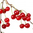 Branch of ripe cherries — Stock Photo