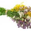 Herbal medicine — Stock Photo
