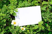 Briar bush with blank paper — Stock Photo