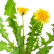 Dandelions (taraxacum officinale) — Stock Photo #6570306