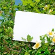 Briar bush with blank paper - Stock Photo