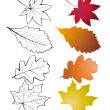 Set of leaves — Stock Vector #6644189