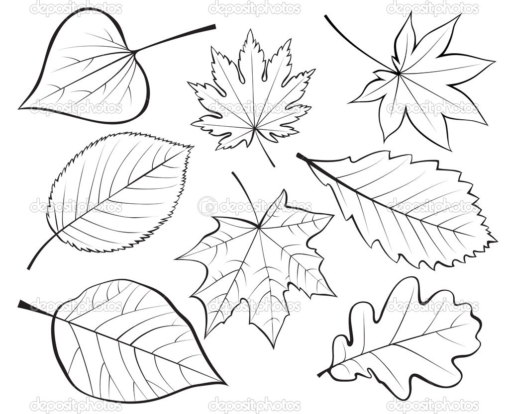 Contour Line Drawing Leaves : Autumn leaves our sketchpad
