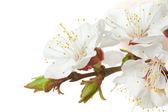 Closeup blossom flower — Stock Photo