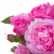 Pink roses bouquet — Stock Photo #5776017