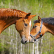 Two horses — Stock Photo #6123556