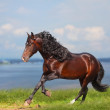 Horse near water — Stock Photo
