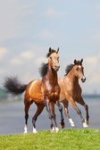 Two horses — Stock fotografie