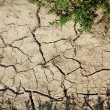 Cracked and barren ground — Stock Photo
