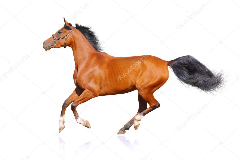 Horse isolated on white — Stock Photo #6658912