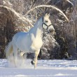 Horse in winter — Stock Photo #6692989