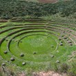 Agriculture experiment of the Incas - Foto Stock